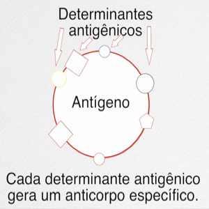 Determinantes antigênicos