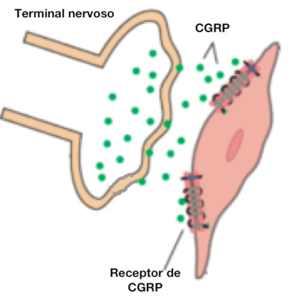 Receptor de CGRP
